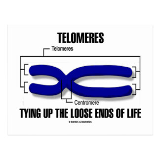 Telomeres Tying Up The Loose Ends Of Life Postcard
