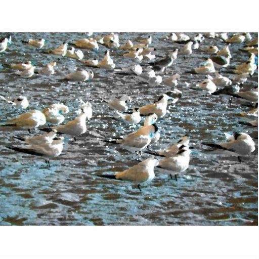 tema azul pintado pájaros la Florida de la playa Escultura Fotografica