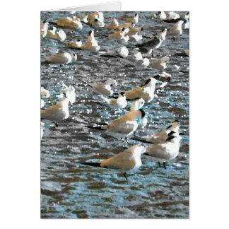 tema azul pintado pájaros la Florida de la playa Tarjetas