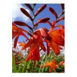 Tema del flower power tarjeta postal