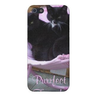 Tema del gato de los amigos de Purrfect iPhone 5 Fundas