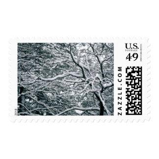 Tema estacional de la foto de los bodas del timbre postal