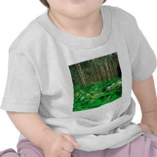 Temblor Aspen Colorado de la pastinaca del árbol Camiseta