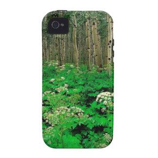 Temblor Aspen de la pastinaca de vaca del bosque Case-Mate iPhone 4 Carcasa