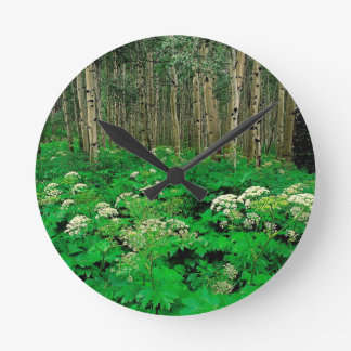 Temblor Aspen de la pastinaca de vaca del bosque Reloj