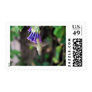 Temescal Hummer Postage Stamp