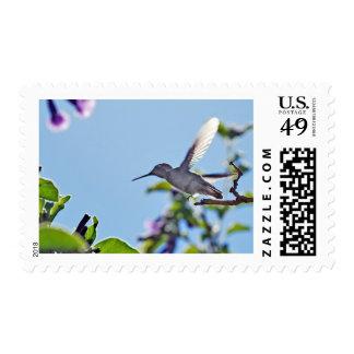 Temescal Hummingbird Postage Stamp