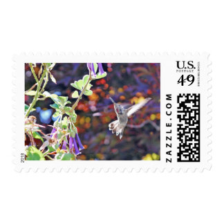 Temescal Hummingbird Stamp