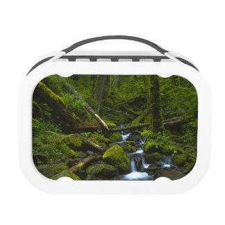Temperate Rainforest Stream in Columbia River Yubo Lunch Box