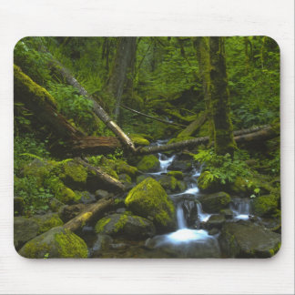 Temperate Rainforest Stream in Columbia River Mouse Pad