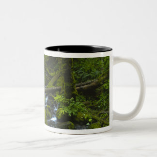 Temperate Rainforest Stream in Columbia River Two-Tone Coffee Mug