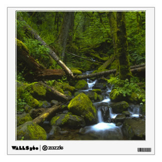Temperate Rainforest Stream in Columbia River Room Stickers
