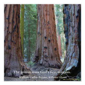 Temple of the Groves - Sacred Sequoia Trees, Quote Poster