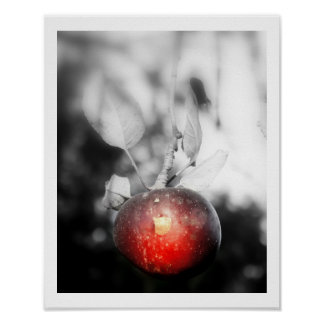 """Temptation"" Apple Photography Print"