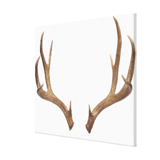 Ten Point Deer Stretched Canvas Prints