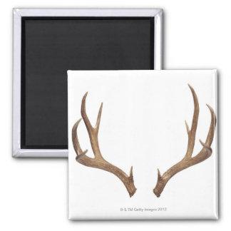 Ten Point Deer Magnet