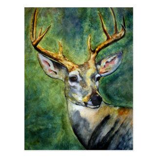 Ten Pointer (Deer) Postcards