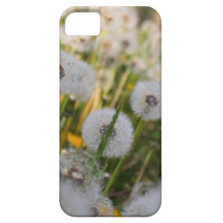 Ten Thousand Wishes iPhone SE/5/5s Case