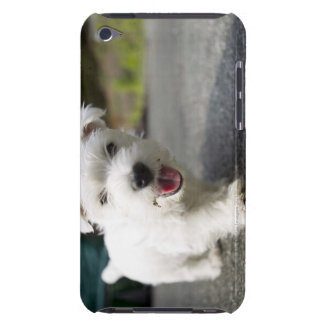 Ten week old female west highland terrier barely there iPod covers
