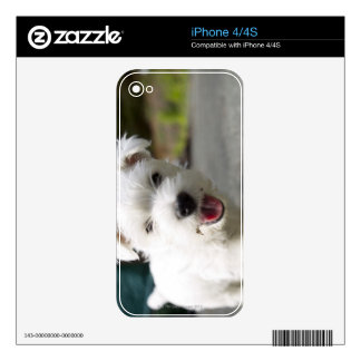 Ten week old female west highland terrier decal for the iPhone 4