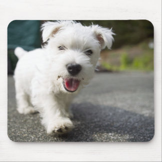 Ten week old female west highland terrier mouse pad