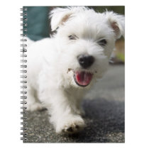 Ten week old female west highland terrier notebook