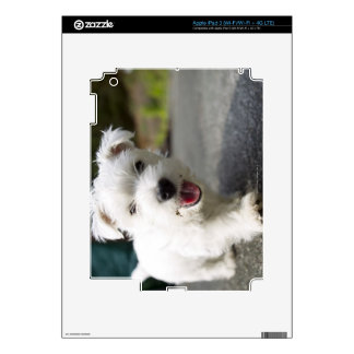 Ten week old female west highland terrier skin for iPad 3