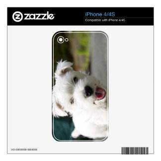 Ten week old female west highland terrier skins for the iPhone 4S