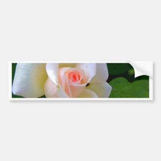 Tender Love Rose Bumper Sticker