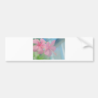 Tender macro shoot of pink hibiscus flowers bumper sticker