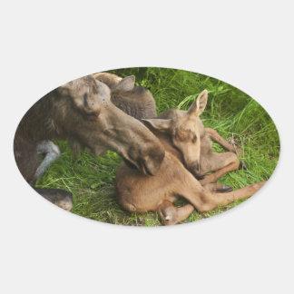 Tender Mother Moose Oval Sticker