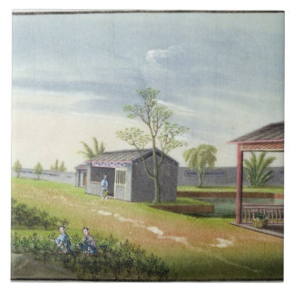 Tending tea plants (w/c on paper) ceramic tile
