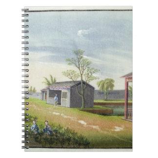 Tending tea plants (w/c on paper) spiral notebook