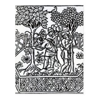 Tending Vines Postcard