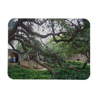 Tendril Tree at the Alamo, San Antonio, Texas Magnet