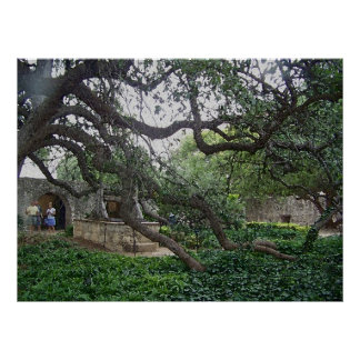 Tendril Tree at the Alamo, San Antonio, Texas Poster
