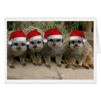 ¡Tenga navidad de un Meerkat! Tarjeta De Felicitación