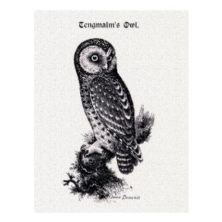 Tengmalm's Owl Vintage Bird Illustration Postcard