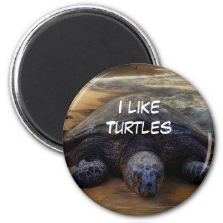 Tengo gusto del imán de las tortugas