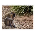 Tengo un picor - mono de araña postales
