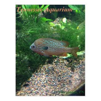 Tennessee Aquarium Postcard
