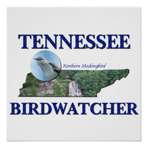 Tennessee Birdwatcher Poster