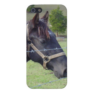 Tennessee Horse2 iPhone SE/5/5s Cover