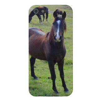 Tennessee Horse iPhone SE/5/5s Cover