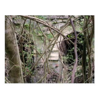 Tennessee Jungle Postcard