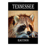 Tennessee Raccoon Cards