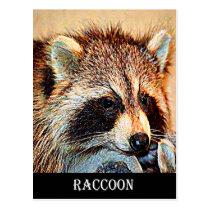 Tennessee Raccoon Postcard