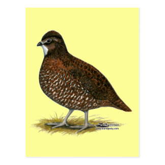 Tennessee Red Quail Post Card