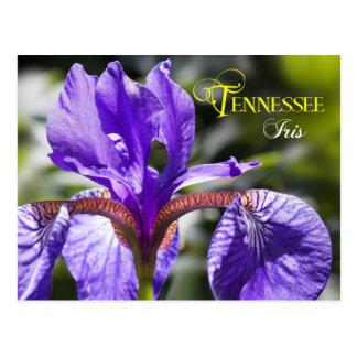 Tennessee State Flower: Iris Postcard