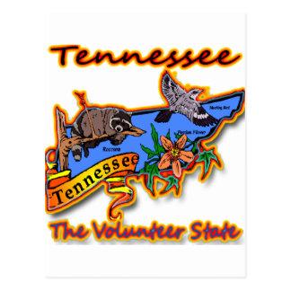 Tennessee The Volunteer State Racoon Flower Bird B Postcards